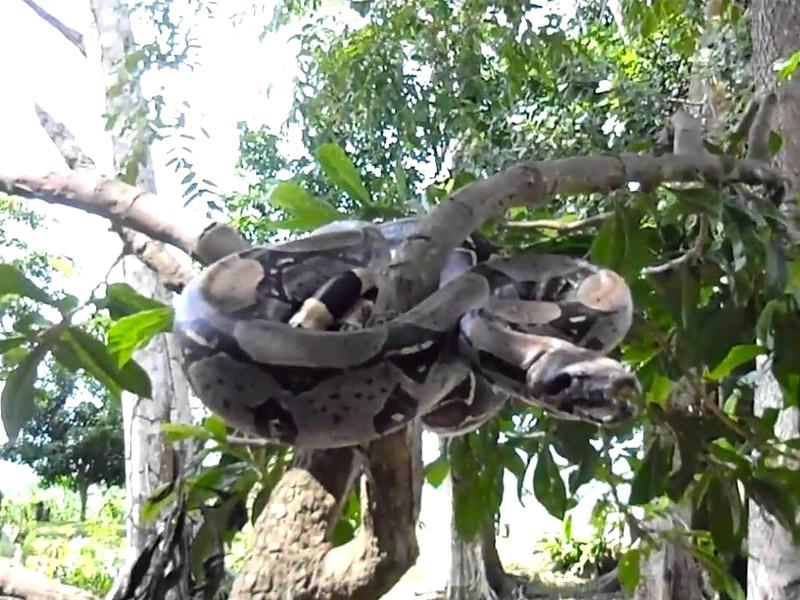 Reptiles Huamboya